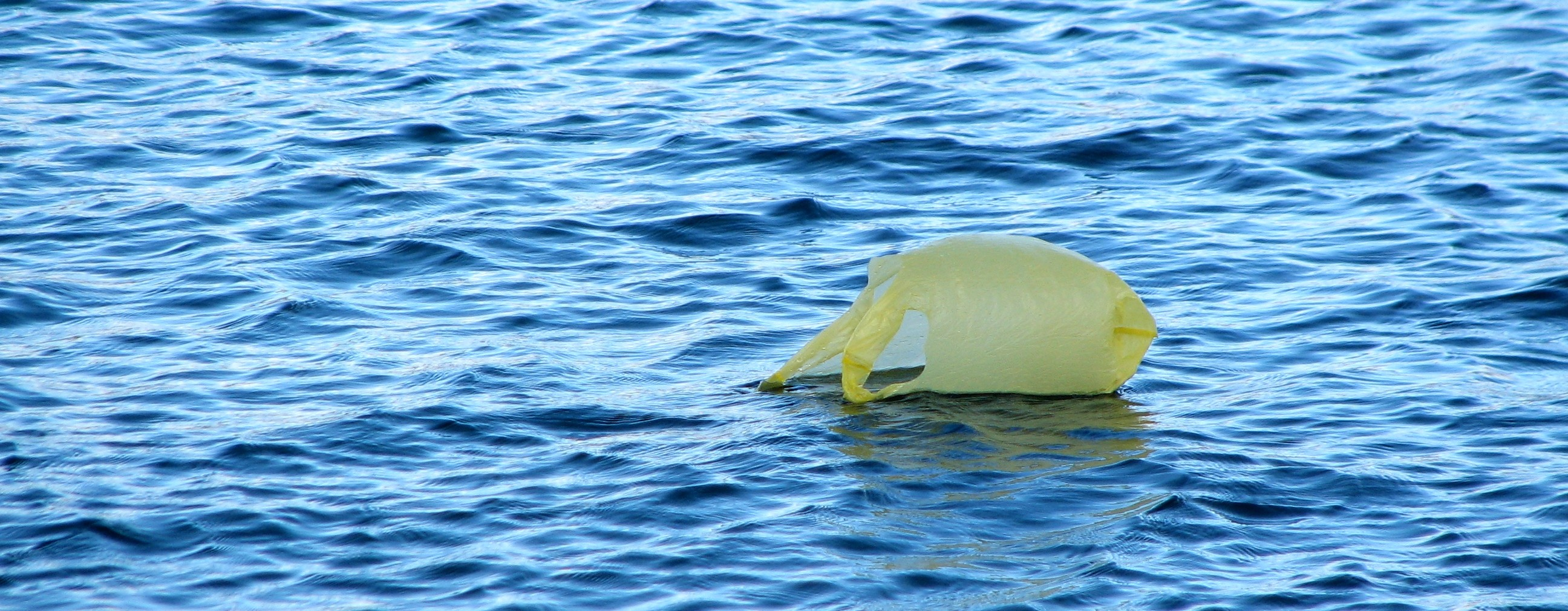carrier bag floating in the ocean