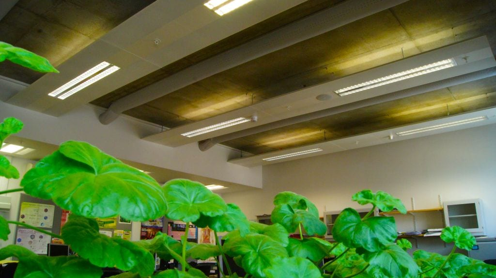 plants in a classroom