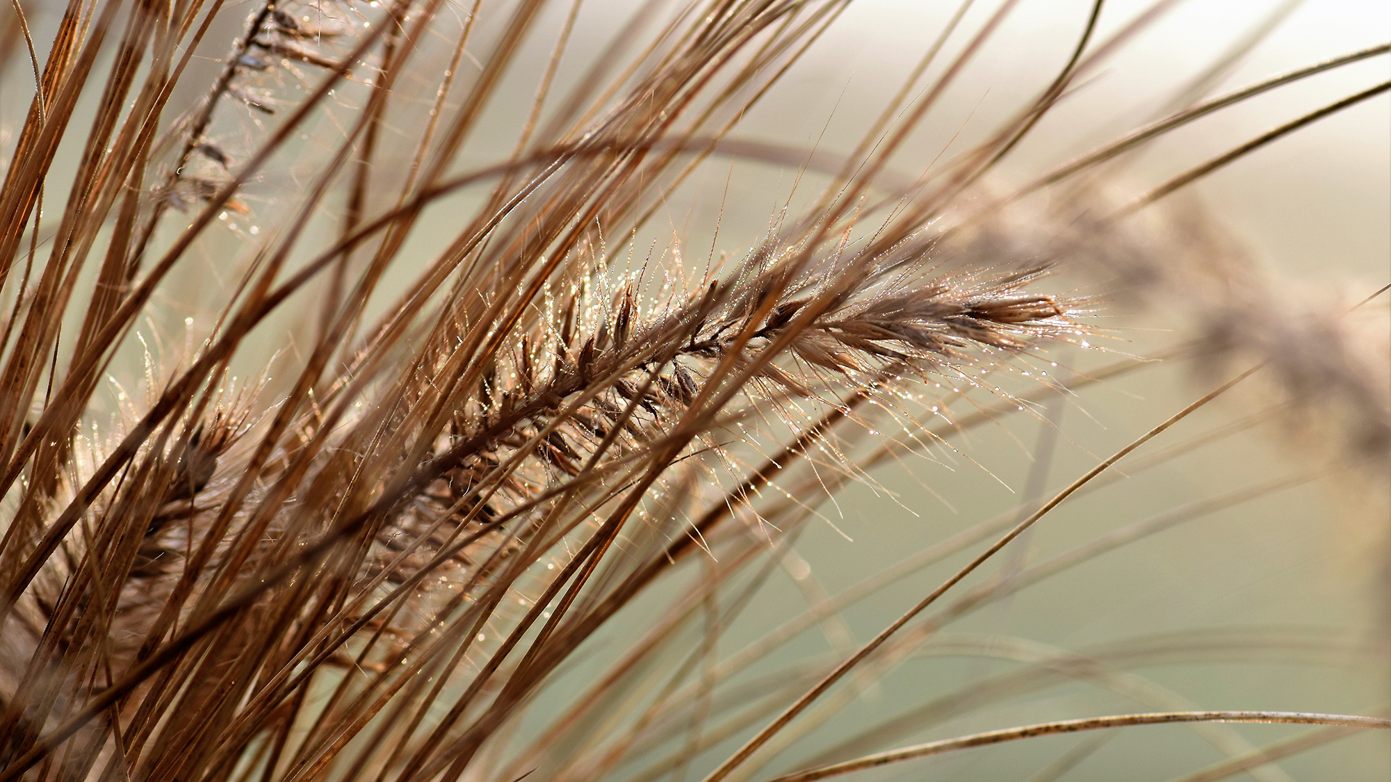 Hay Fever Season – Can Ventilation Help? It Depends